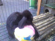 belle mijn konijn mijn schatje
