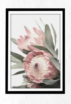 Do you want to improve the attractiveness of your residence by transforming the home decor? Green Wall Art, Floral Wall Art, Flowers Background, Protea Art, Earthy Home Decor, Rosa Pink, Bouquet, Color Rosa, Pastel
