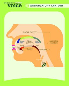 Really clear side view of the articulatory anatomy. This links to phonology, as it shows how the different parts of the mouth may work in collaboration when forming different sounds. Speech Pathology, Speech Language Pathology, Speech And Language, Music Therapy, Speech Therapy, Elementary Music, Music Classroom, Teaching Music, Music Lessons