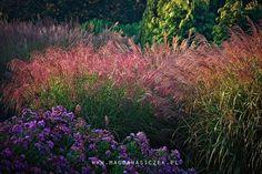 10 2014 wizyta fotograficzna Magdy Wasiczek w Arboretum Trojanów Marzena Bąkowska Plants, Pictures, Photos, Flora, Plant, Drawings