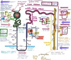 """THE NEPRHON """" EDIT Please note that there´s a mistake in the drawing. The place where the macula densa cells should be is in the Distal Tubule, not the Collecting Duct. Thanks """" I did this a while ago but didn't have the time to explain it… so i. Renal Physiology, Human Anatomy And Physiology, Med Surg Nursing, Medicine Notes, Pharmacy School, Nursing School Notes, Biology Lessons, Medical Anatomy, Medical Information"""
