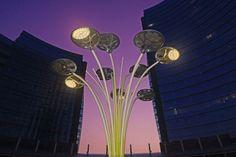 Fiore moderno al tramonto