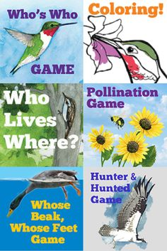 AUDUBON ADVENTURES|For Young Nature-Lovers  Try these puzzles!