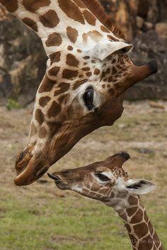 Jacksonville Zoo 3-12-13 by RobBixbyPhotography