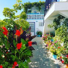 Entrance....🍃🌼🌻  🌍 www.angelosalonissos.com #angelos_apartments #alonissos #sporades #greece #summer2017 #flowers #entrance #surroundings