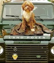 land rover barbour - we're still not getting the dog. its the Land Rover we're focussing on here
