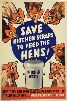 Save kitchen scraps to feed the hens, Gov. poster, want to hang this in the coop. Keeping Chickens, Raising Chickens, Gallus Gallus Domesticus, Chicken Lady, Chicken Feed, Chicken Scratch, Chicken Eggs, Chickens And Roosters, Urban Chickens