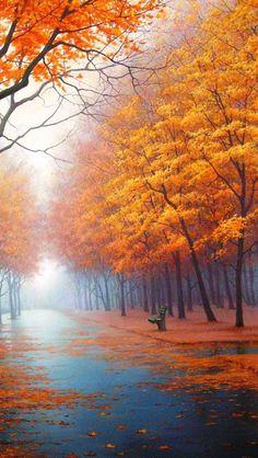 Square-In-Autumn