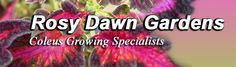 Awesome selection of Coleus along with good instructions on care.