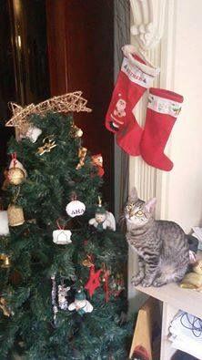 #concursonavideño #navidad #fotosperros #perros #gatos #dog #gos #perrosdisfrazados #animales #mascotas  En: www.theanimallshop.com