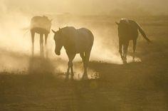 Dusty Range