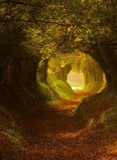 Tree Tunnel, Halnaker, Northern Ireland by Oliver Andreas Jones on This photo was taken by an eight-year-old. Tree Tunnel, Forest Path, Forest Trail, Deep Forest, Autumn Forest, Forest Road, Forest Fairy, Forest House, Fantasy Landscape