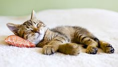 Contents of ArticleWhat are the most popular cat names?List of Top 100 Most Popular Cat Names in … Wild Animals List, Baby Animals, Cute Kittens, Cats And Kittens, Funny Cat Videos, Funny Cats, Cool Cats, Image Zen, Most Popular Cat Names