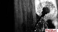 ..Under drops.. | Papadii - PxlShot.ro