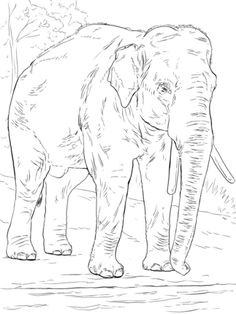 Asiatic Elephant Coloring Page From Elephants Category Select 28336 Printable Crafts Of Cartoons Nature Animals Bible And Many More