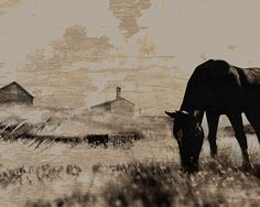 8x10, digital download, horse art print, animal art, gift for horse lover, nature decor, farm art, country decor, nature art, digital print