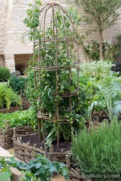 love the woven raised beds and trellis
