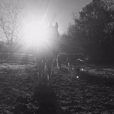 WARHorses_welcome to our website www.womenofageridinghorses. Photo by Melanie Eberhardt