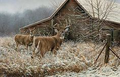 Chance Encounter-Whitetail Deer Print by Millette : Wild Wings
