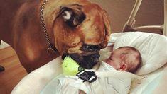 Il neonato piange, il cane lo consola portandogli il suo giocattolo preferito - La Stampa