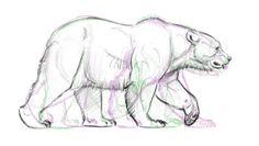 Tutoriales de Animación | Osos de Aaron Blaise | Notodoanimacion.es Pencil Drawings Of Animals, Animal Sketches, Art Drawings Sketches, Grizzly Bear Drawing, Bear Sketch, Bear Character, Bear Pictures, Bear Art, Wildlife Art