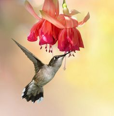 Hummingbird by Irene on 500px