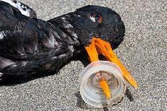 Por que banir o plástico? Porque o material é um dos maiores inimigos do meio ambiente.
