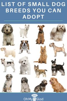 The Top 10 Small Dog Breeds With Pictures To Adopt Today Dog Breeds Small Dog Breeds Breeds