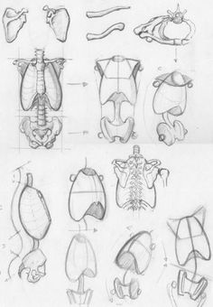 Anatomy Drawing Tutorial Random anatomy sketches 2 - a collection of drawings of simplified ribcages and pelvises by on deviantART. Body Sketches, Anatomy Sketches, Drawing Sketches, Drawing Tips, Sketching, Drawing Ideas, Figure Drawing Reference, Anatomy Reference, Pose Reference