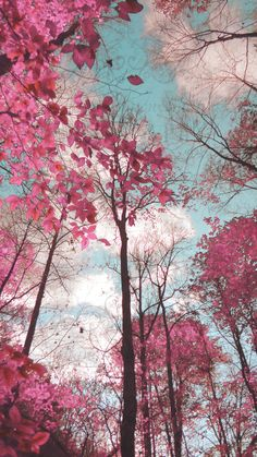 Dreamy Landscape Pink Blue Trees Surreal Nature Photo