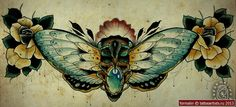 цикада фото - Поиск в Google