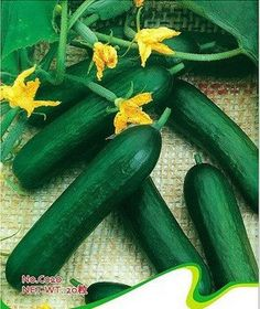 Dutch Cucumber Seeds Vegetable Seeds Plant seeds 20 by Greenworld1