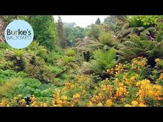 (33) Burke's Backyard, The Lost Gardens Of Heligan, England - YouTube