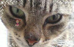 ARTES DA MITSY: Bichinhos de Estimação  Kitty