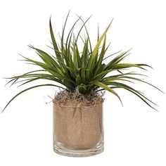 Wood and Burlap Faux Grass in Glass Pot ($48) ❤ liked on Polyvore featuring home, home decor, floral decor, plants, fillers, flowers, decor, greenery, home accessories and glass home decor