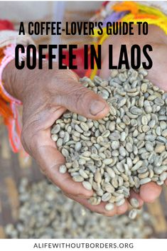 A coffee-lover's guide to the best Lao coffee. Discover where to find the best coffee in Laos with this ultimate resource. #Laos #BolavenPlateau #LaoCoffee | Things to do in Laos | Coffee in Laos | Paksong | ALWB