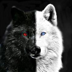 El lobo blanco con negro