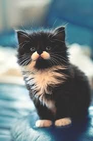 Image result for black and white cat with kittens