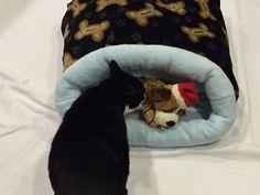 "Dog or Cat Bed Snuggle sack 24"" X 26"" Dog Bones & paw prints."