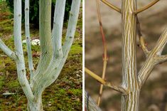 5 arbustes à bois coloré qu'il faut avoir dans son jardin d'hiver - Blog Promesse de fleurs Parc Floral, Cactus Plante, Winter Garden, Botany, Wildlife, Rose, Blog, Gardens, Colors