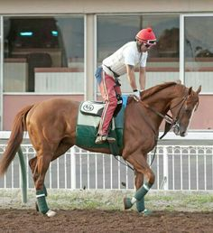 CALIFORNIA CHROME was back on the track today for a jog, and he looked fantastic!