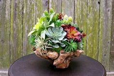 Faux Succulent Arrangement 13 Wooden Manzanita Bowl