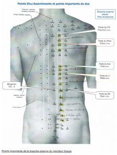 points shu et important du dos Древний метод хиджама Acupressure Points, Cupping Therapy, Massage Therapy, Hijama Points, Ear Reflexology, Shiatsu, Traditional Chinese Medicine, Natural Health Remedies, Animals