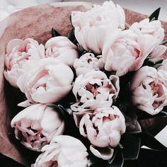 ❁ #cool #inspiration #petals #pretty #OMG #wow #cute #pastel #gift #flowers #nature #roses #boyfriend #beautiful #present #pink #light #gorgeous #details #bouquet #color #random #colors #tagforlikes