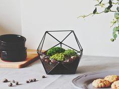 Glass Geometric Planter / Icosahedron Terrarium - Waen - Donice