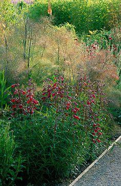 Perennial planting by christopher bradley-hole: Penstemon 'firebird' and foeniculum vulgare purpureum