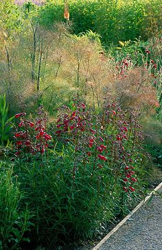 Perennial planting by christopher bradley-hole: Penstemon 'firebird' and foeniculum vulgare purpureum