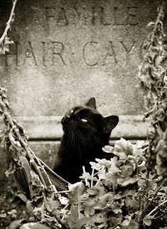 Black cat and tombstone. In a Gothic black frame, this would be a cute Halloween decoration.