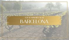 I grew up in a winery near Barcelona, let me show you the best wine & cava tours near the city and show you how to visit independently or on a tour Barcelona Tours, Barcelona Travel, Dream Vacation Spots, Dream Vacations, Wine Tourism, Once In A Lifetime, Tour Guide, The Locals, Wineries