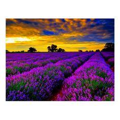 Beautiful scenery lavender fields in Provence France Golden sunset Beautiful World, Beautiful Places, Beautiful Scenery, Beautiful Sunset, Amazing Places, Beautiful Flowers, Beautiful Gorgeous, Simply Beautiful, Lavender Fields